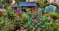 Cuộc sống yên bình của bà mẹ hai con trong ngôi nhà cấp 4 và khu vườn trồng đủ loại hoa rực rỡ đẹp như trong cổ tích