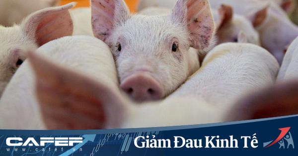 Chuỗi cung ứng thịt lợn Mỹ gián đoạn nghiêm trọng: Người tiêu dùng hoảng loạn tích trữ nhưng nông dân lại tiêu huỷ hàng trăm nghìn con