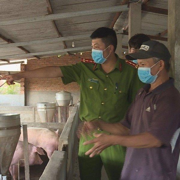 Xử lý một trang trại chăn nuôi heo xả thải ra môi trường