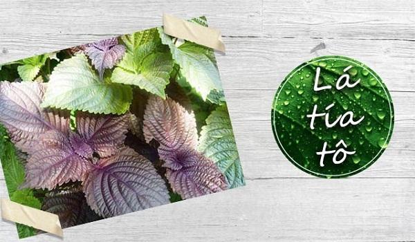Chữa bệnh dạ dày bằng 11 loại lá cây trong vườn nhà-7