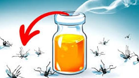 5 mùi hương giúp diệt và xua đuổi muỗi hiệu quả, lại vô cùng an toàn