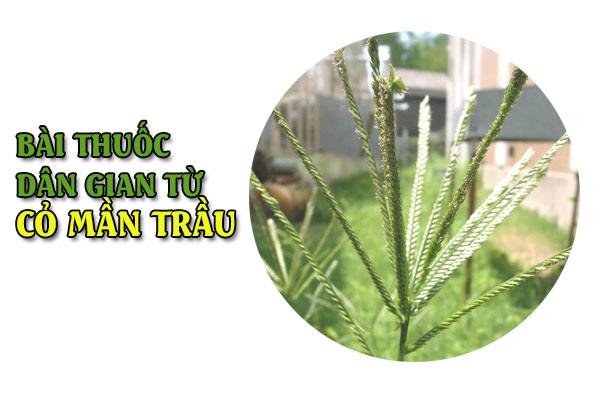 6 bài thuốc dân gian từ cỏ mần trầu nhất định phải lưu lại khi cần áp dụng ngay-1