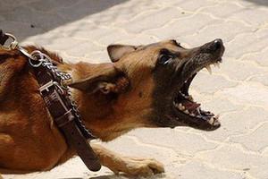 Một bé trai 7 tuổi ở Nghệ An tử vong nghi chó dại cắn-1