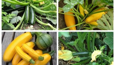 """6 loại quả thuộc """"họ nhà bầu bí"""" nên rước ngay về để phòng ngừa bệnh mùa hè"""