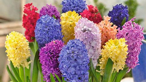 5 loại cây, hoa