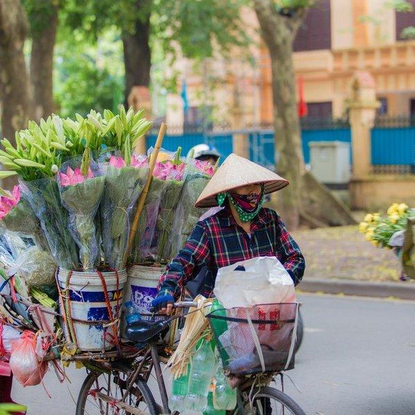 Hoa sen đầu mùa rong ruổi khắp phố phường Hà Nội