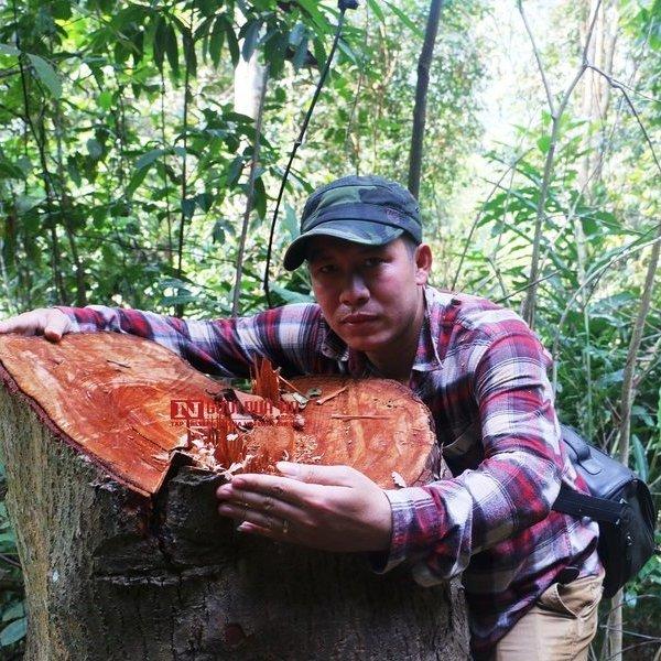 """Hàng loạt cây gỗ rừng tự nhiên, đường kính lớn ở Thanh Hóa bị """"lâm tặc"""" chặt hạ"""