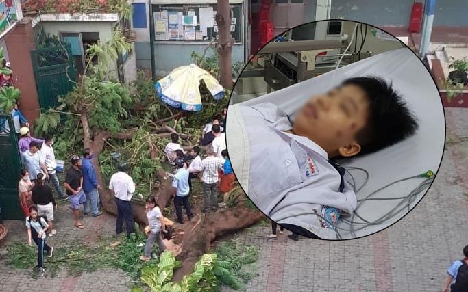 Học sinh bị cây đè trúng trong sân trường bàng hoàng nhớ lại: