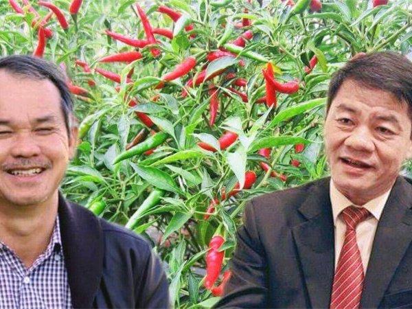Ông Trần Bá Dương mua vào, Phó Chủ tịch Thaco bán ra cổ phiếu công ty bầu Đức