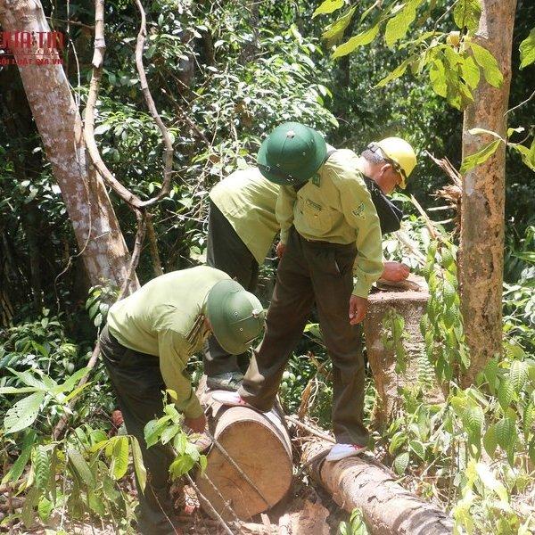 """Vụ rừng phòng hộ bị """"xẻ thịt"""" ở Thanh Hóa: Chủ rừng là chủ tịch và cán bộ địa chính"""