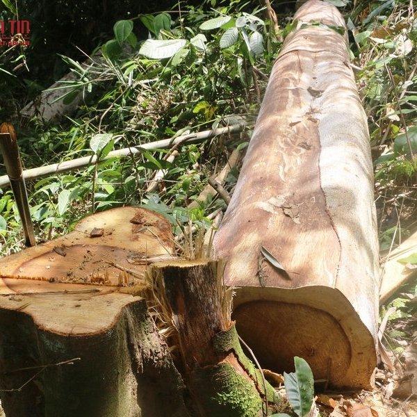 """Tiếp tục phát hiện nhiều khu rừng phòng hộ ở Thanh Hóa bị lâm tặc """"xẻ thịt"""""""