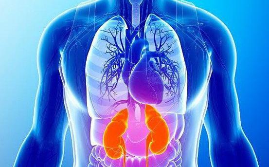 Đông y mách bạn cách dưỡng ngũ tạng: Bệnh chỉ là ngọn, phải phòng chữa từ gốc