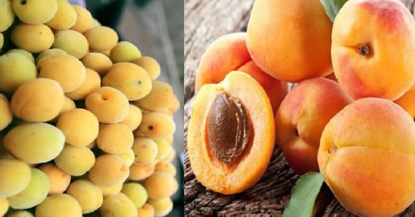 4 loại thực phẩm đầu bảng có thể giúp giảm nguy cơ mắc ung thư, ai cũng nên ăn mỗi ngày