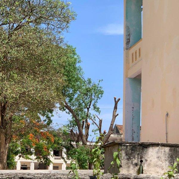 Hai cây xà cừ hàng chục năm tuổi ở trường học Nghệ An bị cắt tỉa trơ trụi
