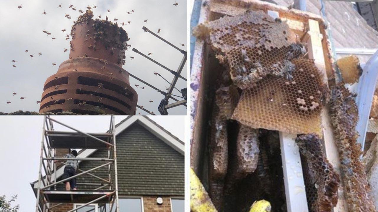 Mua nhà mới, cặp vợ chồng được 'tặng kèm' 160.000 con ong trong ống khói