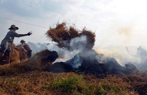 Hà Nội đề xuất cấm đốt rơm rạ, phụ phẩm nông nghiệp