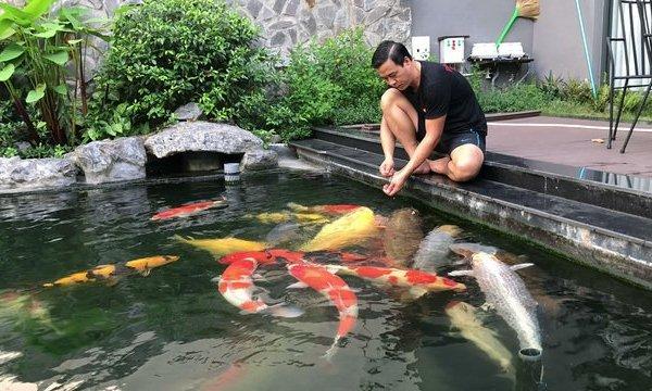 Đại gia kín tiếng Sài thành sở hữu đàn cá Koi