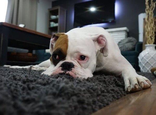 Pháp luật có cấm nuôi chó, mèo ở chung cư không?