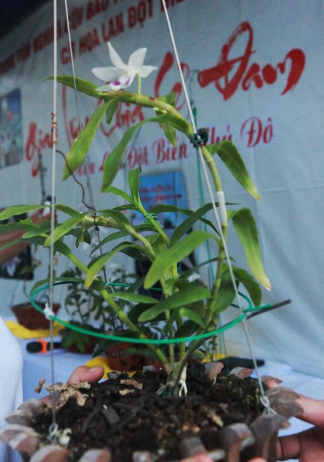 Danh tính đại gia Hà thành chi hẳn 5 tỷ mua bông hoa nhìn như rau muống-3