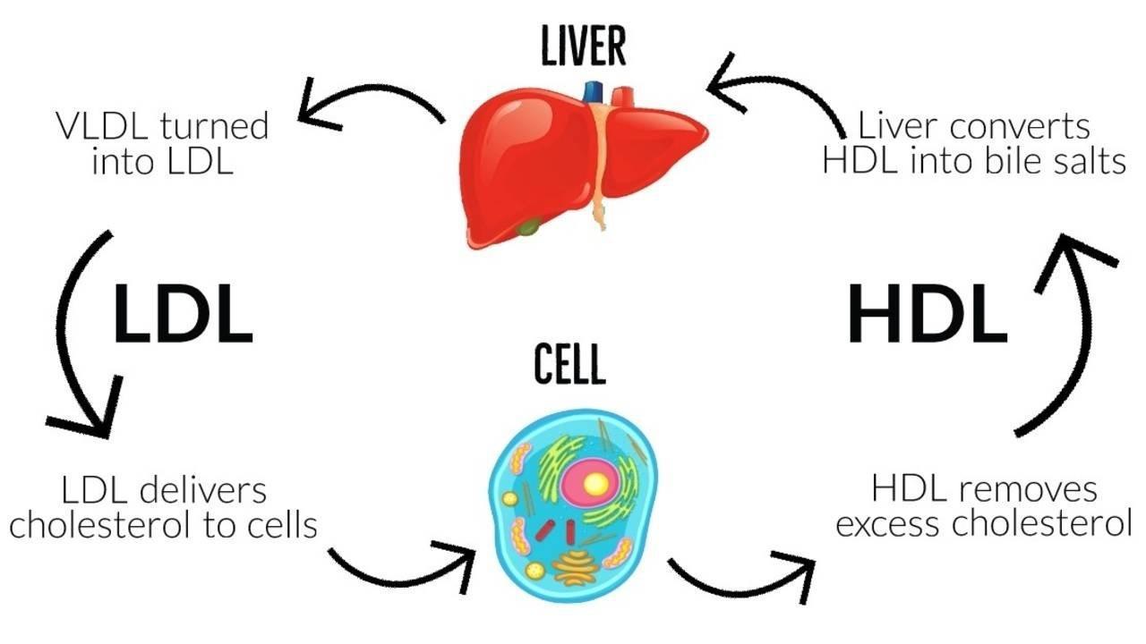 Một loại vắc-xin phòng bệnh tim mạch: Tiêm một mũi ở tuổi 20 sẽ khỏe mạnh đến suốt đời-3