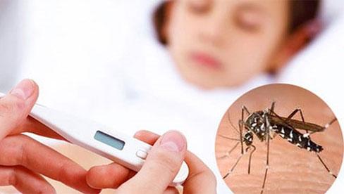 Hà Nội đang vào mùa dich bệnh sốt xuất huyết : Cách chăm sóc và phòng ngừa bệnh tại nhà