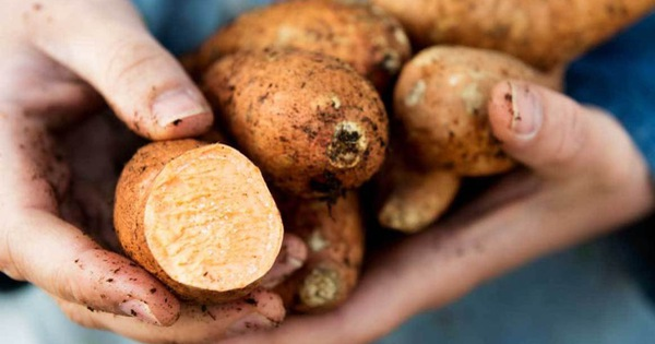 4 loại thực phẩm đừng nên ăn cùng khoai lang nếu không muốn bị đau bụng, đầy hơi, trào ngược dạ dày