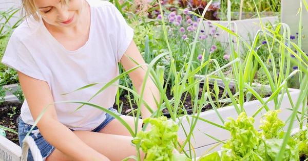Người phụ nữ quyết không bỏ phí tuổi thanh xuân bằng cách tạo khu vườn quanh năm xanh mát