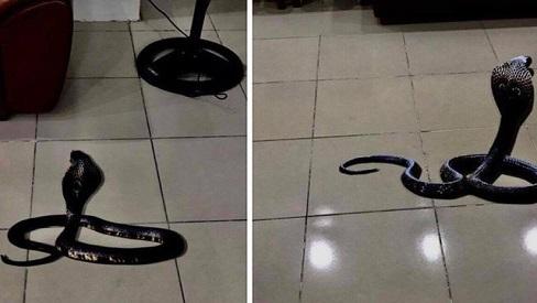 Cẩn thận với rắn cắn trong mùa hè và cách xử lý khi bị rắn cắn