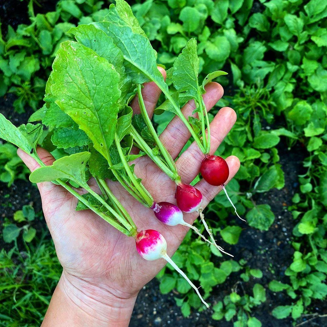 Khu vườn của cô gái xinh đẹp 23 tuổi quyết dành cả thanh xuân để trồng rau quả sạch-21