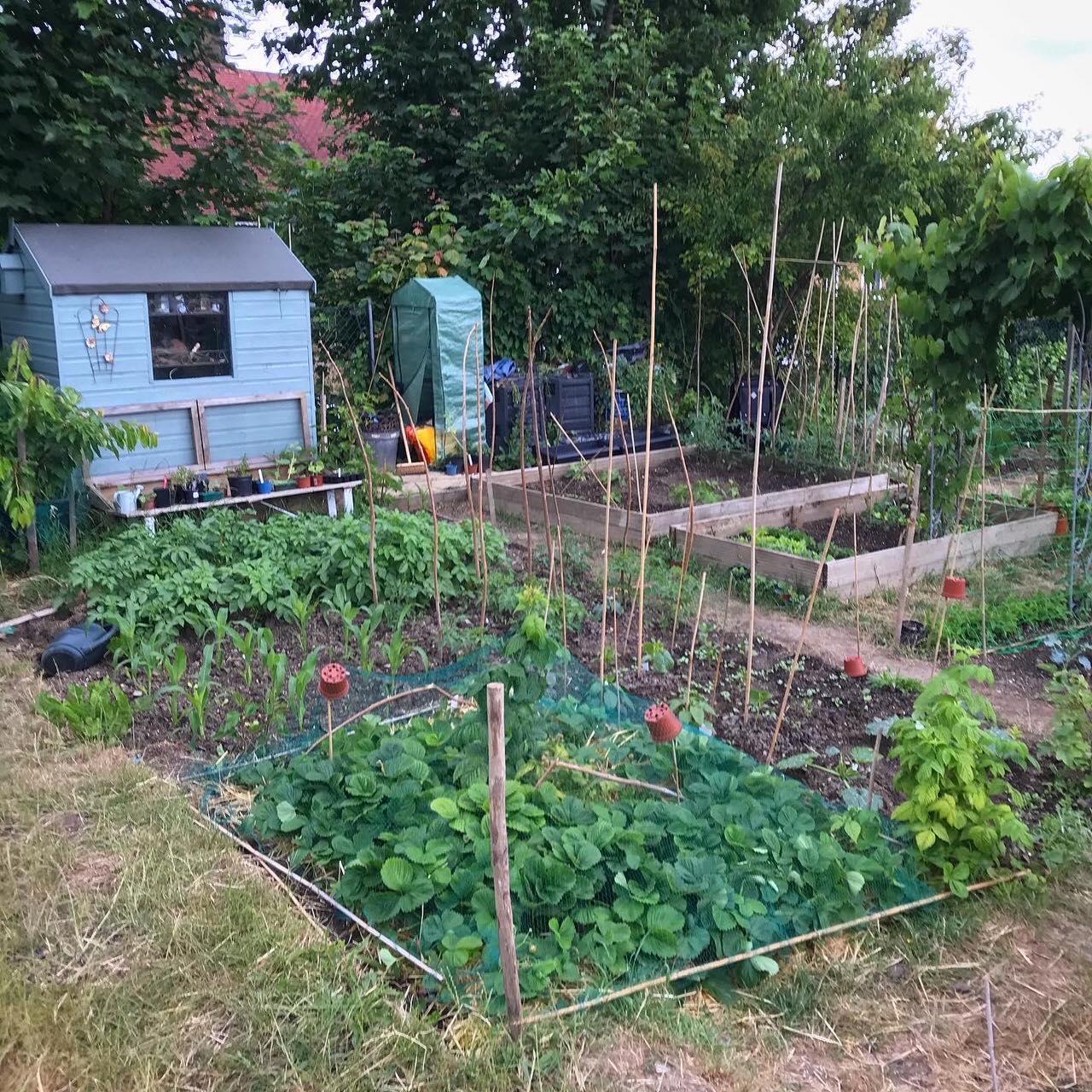 Khu vườn của cô gái xinh đẹp 23 tuổi quyết dành cả thanh xuân để trồng rau quả sạch-29