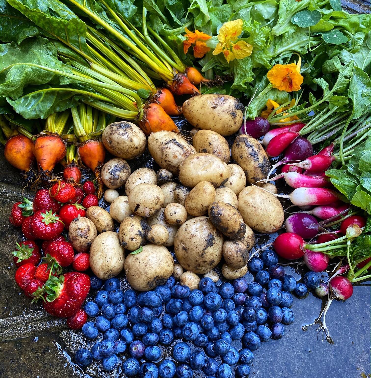 Khu vườn của cô gái xinh đẹp 23 tuổi quyết dành cả thanh xuân để trồng rau quả sạch-28