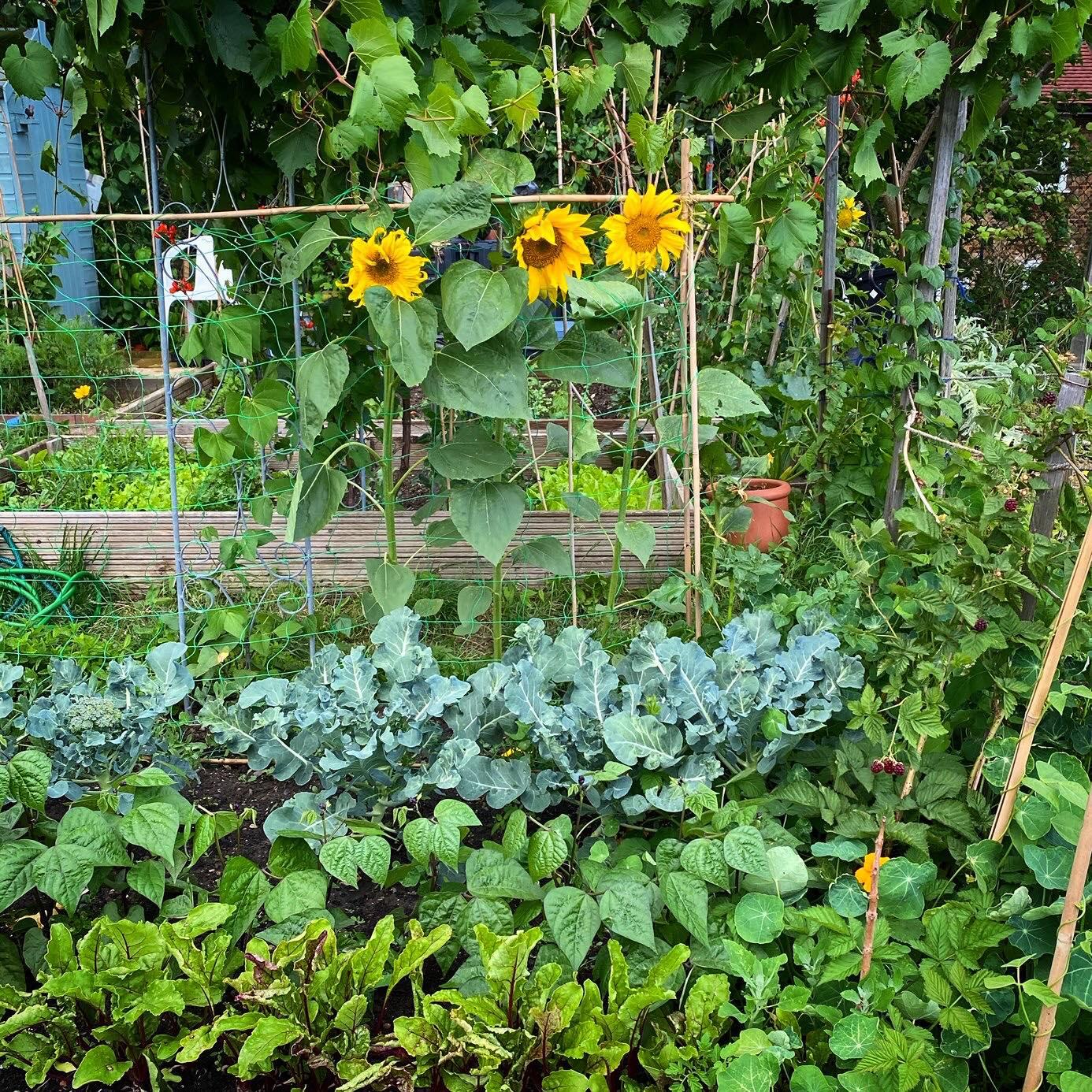 Khu vườn của cô gái xinh đẹp 23 tuổi quyết dành cả thanh xuân để trồng rau quả sạch-1