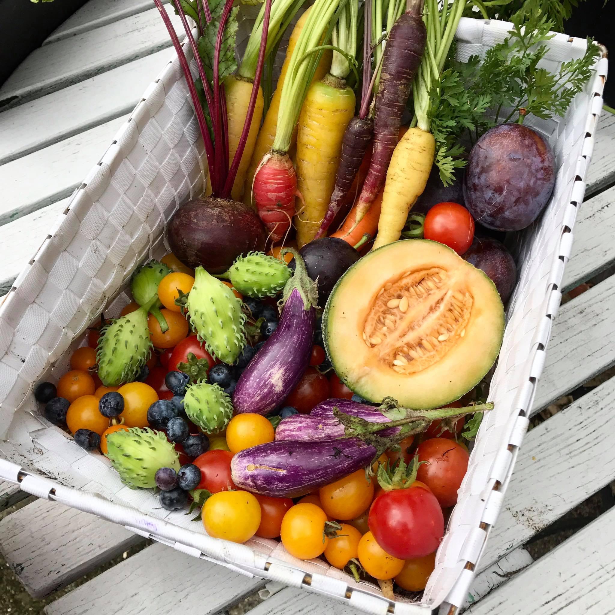 Khu vườn của cô gái xinh đẹp 23 tuổi quyết dành cả thanh xuân để trồng rau quả sạch-34
