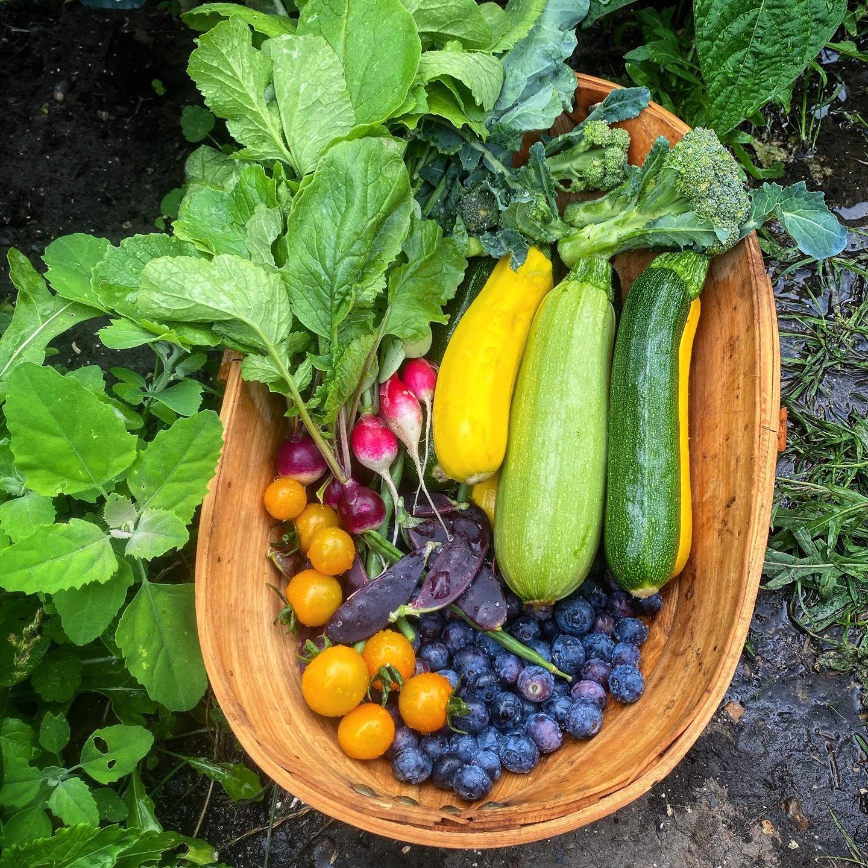 Khu vườn của cô gái xinh đẹp 23 tuổi quyết dành cả thanh xuân để trồng rau quả sạch-30