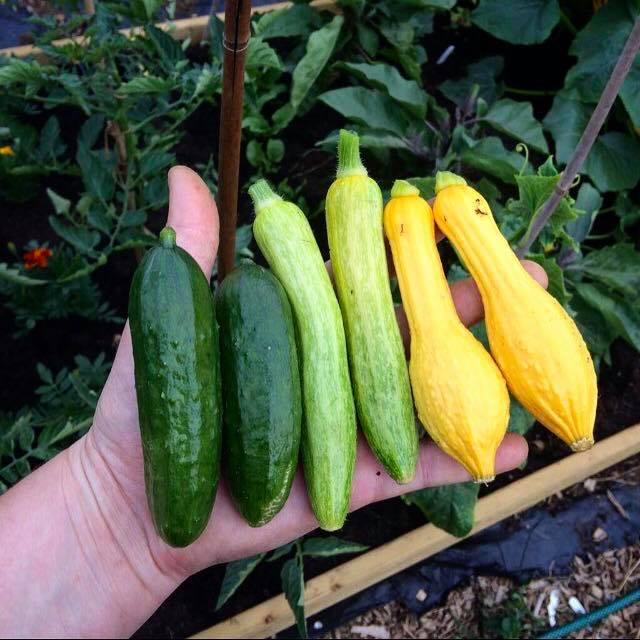 Khu vườn của cô gái xinh đẹp 23 tuổi quyết dành cả thanh xuân để trồng rau quả sạch-6