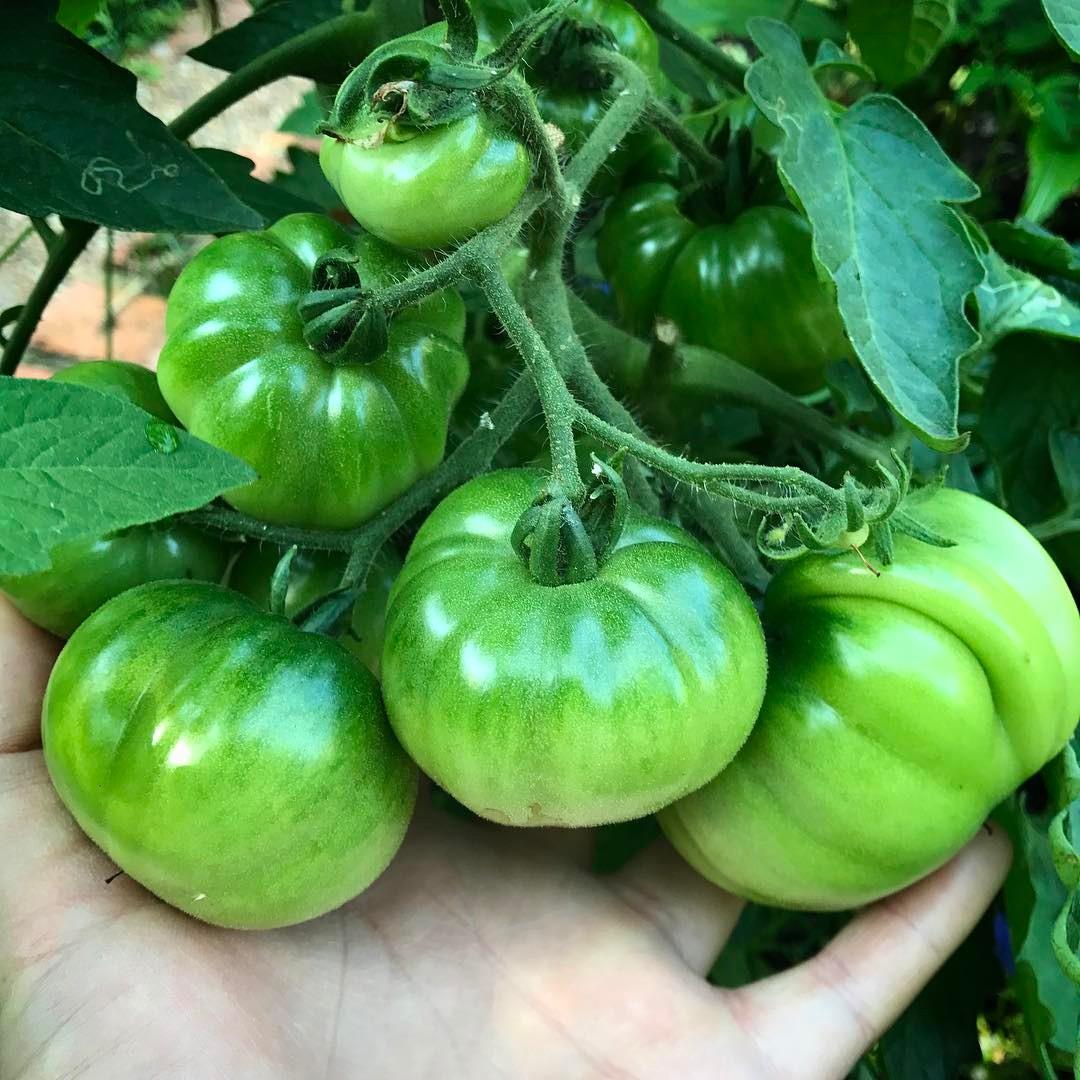 Khu vườn của cô gái xinh đẹp 23 tuổi quyết dành cả thanh xuân để trồng rau quả sạch-18