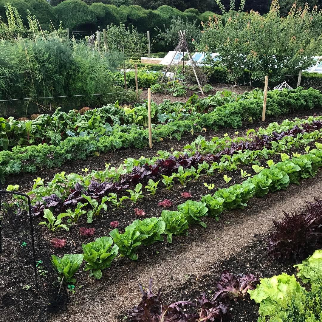 Khu vườn của cô gái xinh đẹp 23 tuổi quyết dành cả thanh xuân để trồng rau quả sạch-2