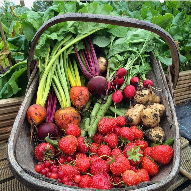 Khu vườn của cô gái xinh đẹp 23 tuổi quyết dành cả thanh xuân để trồng rau quả sạch-19