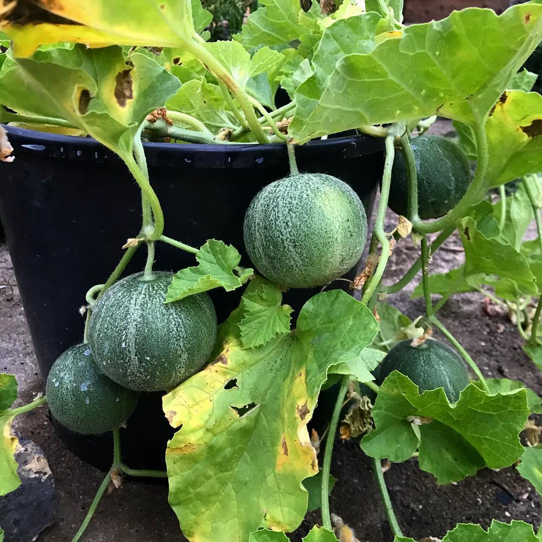 Khu vườn của cô gái xinh đẹp 23 tuổi quyết dành cả thanh xuân để trồng rau quả sạch-15
