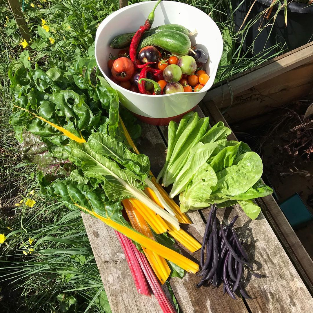 Khu vườn của cô gái xinh đẹp 23 tuổi quyết dành cả thanh xuân để trồng rau quả sạch-24