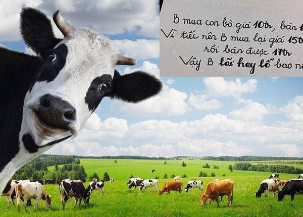 Bài toán bán bò lỗ hay lãi không khó nhưng 99% người trả lời sai, còn bạn?
