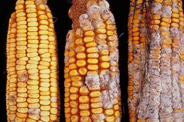 Thực phẩm nhiễm  hóa chất độc, nguyên do  vì đâu?