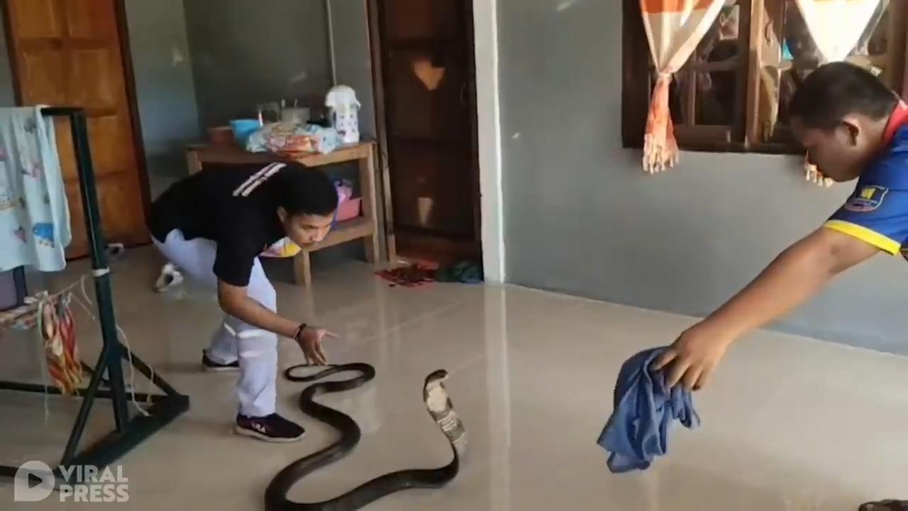 Đang ru con ngủ, mẹ trẻ hoảng hốt thấy rắn hổ mang đen xì chui vào nhà