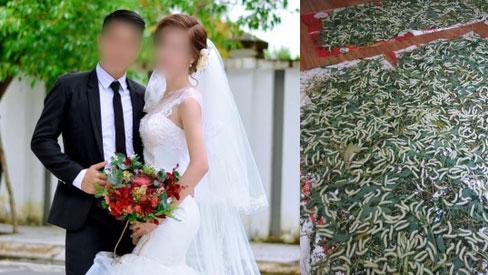 """Con dâu mang bầu đến tháng thứ 8 nhưng bị """"đặt nhờ"""" mấy nong tằm trong phòng ngủ, câu nói của bố chồng khiến MXH ai cũng phẫn nộ"""