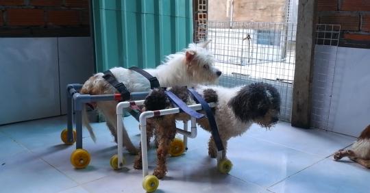 Người phụ nữ chế xe lăn bằng ống nước cho chó mèo khuyết tật