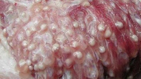 Phần thịt bẩn nhất trên cơ thể con lợn, dù giá rẻ thế nào cũng không nên mua