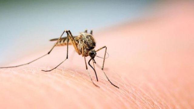 Đuổi muỗi ra khỏi nhà bằng những cách cực đơn giản sau