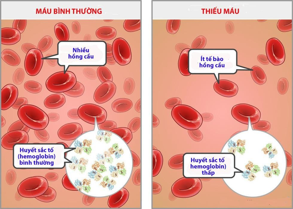 Chức năng tạo máu và sự phát triển của cơ thể trẻ-1