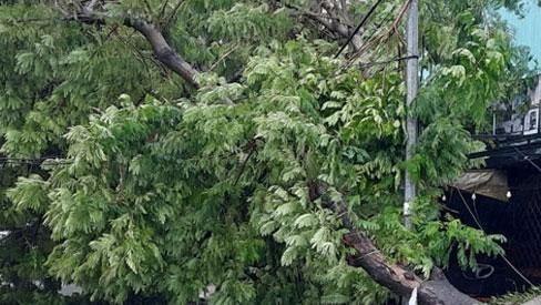 Video: Bão số 9 áp sát Quảng Ngãi, quật đổ nhiều cây cối, biển bảng quảng cáo