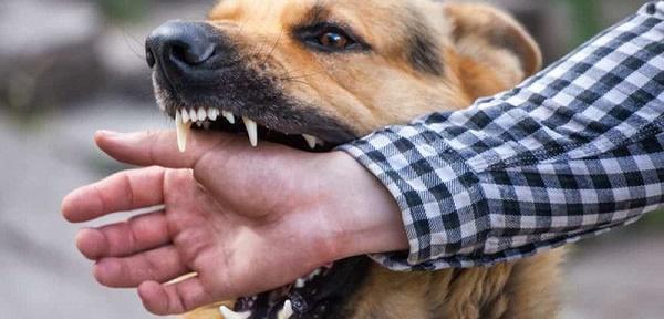 Cùng bị chó nhà nuôi cắn, một trong ba người lên cơn dại và tử vong-1